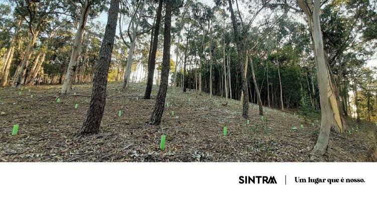 Trabalhos de recuperação do Parque Florestal da Piedade da Serra